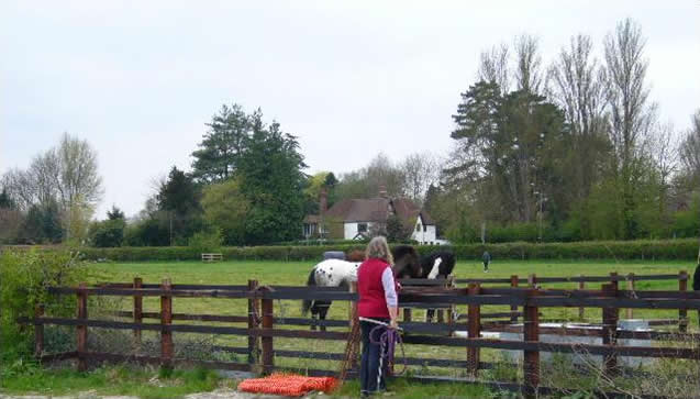 Horse livery Bourne End